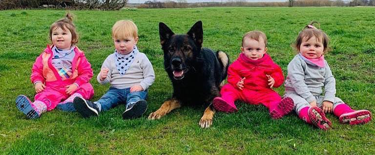 family guard dog