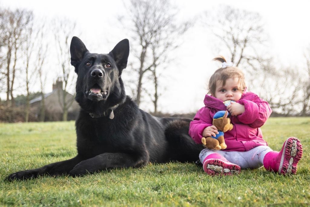 protection dogs